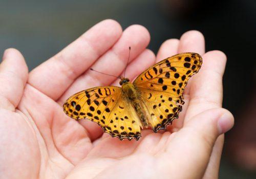 myriam wauquiz - butterfly-4396444_1920